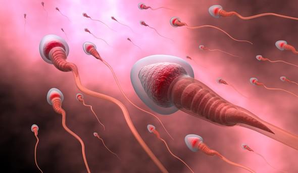 Сперматозоиды с белыми головками