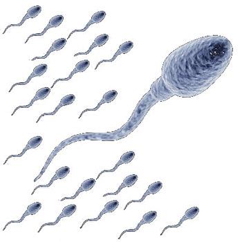Множество сперматозоидов