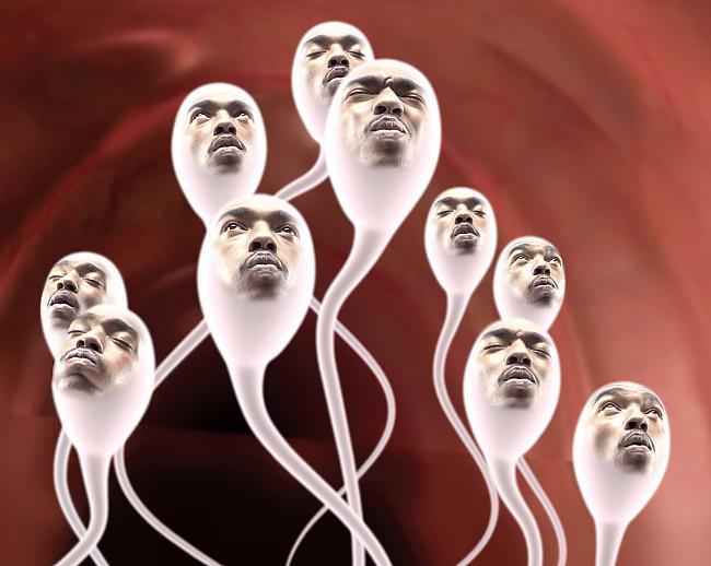 Сперматозоиды с лицами