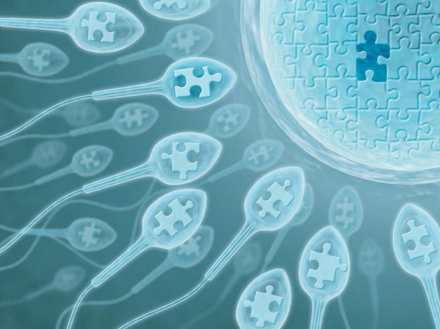 Сперматозоиды с пазлами