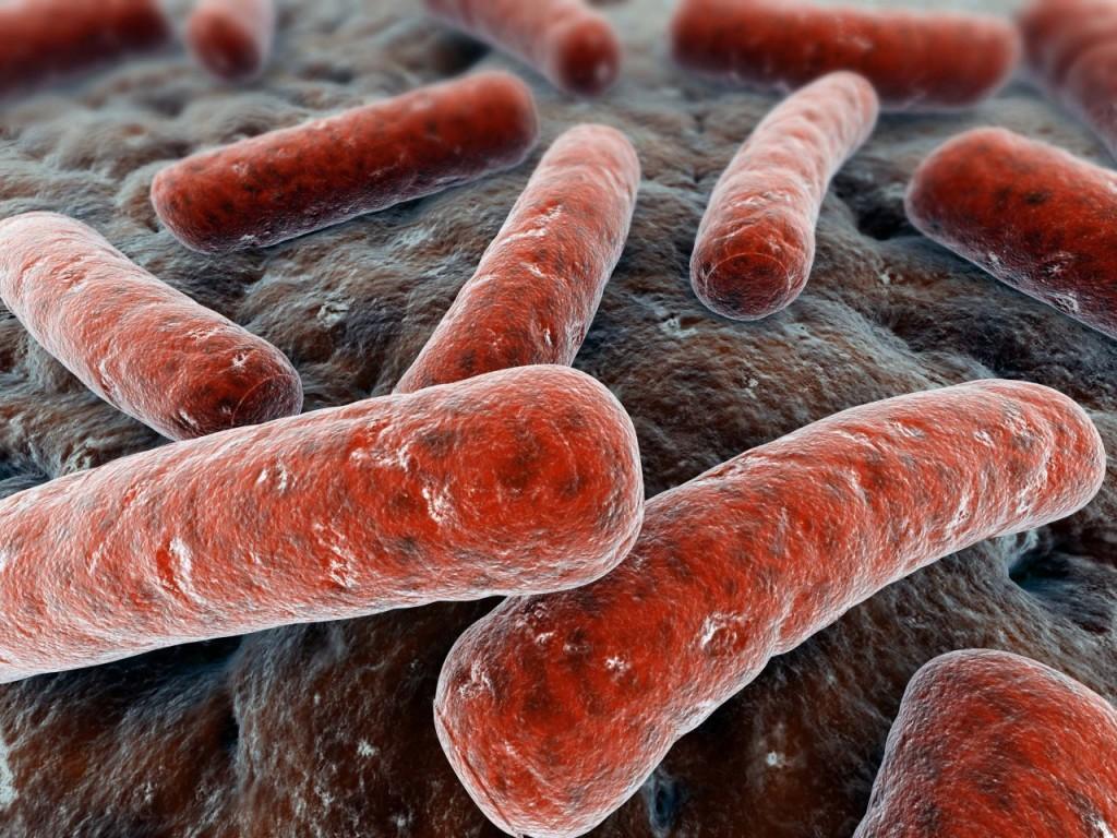 Красные бактерии