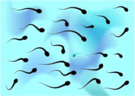 Черные сперматозоиды