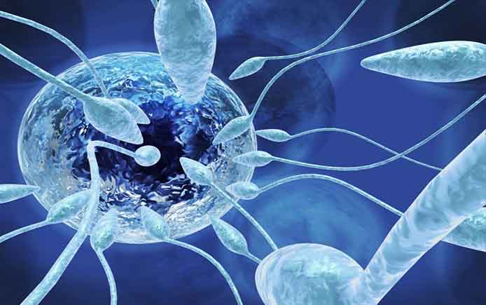 Голубые сперматозоиды и яйцеклетка