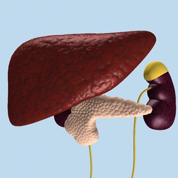 Лечение и симптомы цирроза печени у мужчин: начальная и последняя стадии, сколько живут?
