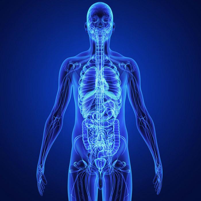 Тело и внутренности человека