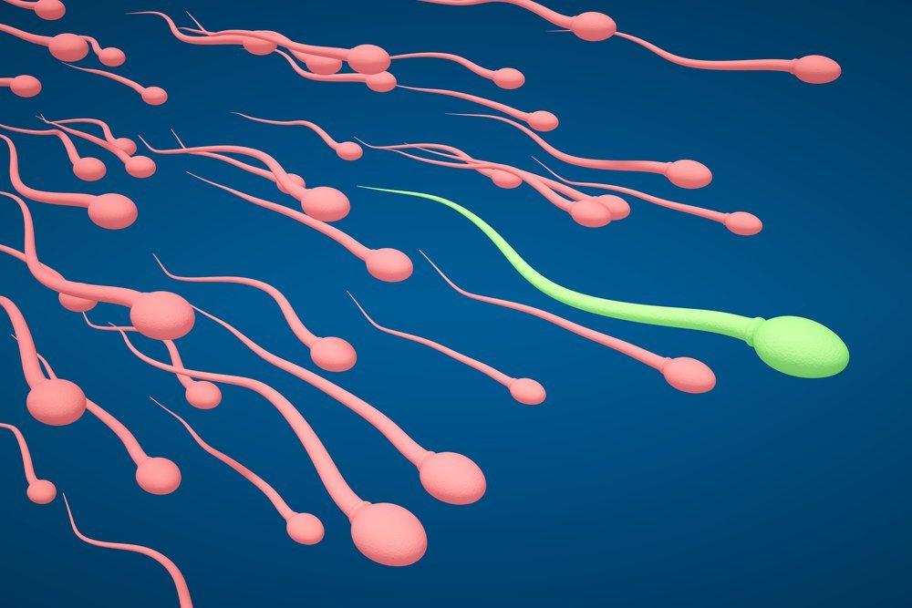 Розовые и зеленые сперматозоиды