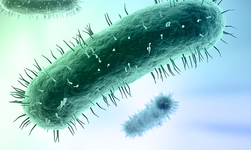 Бактерия голубого цвета